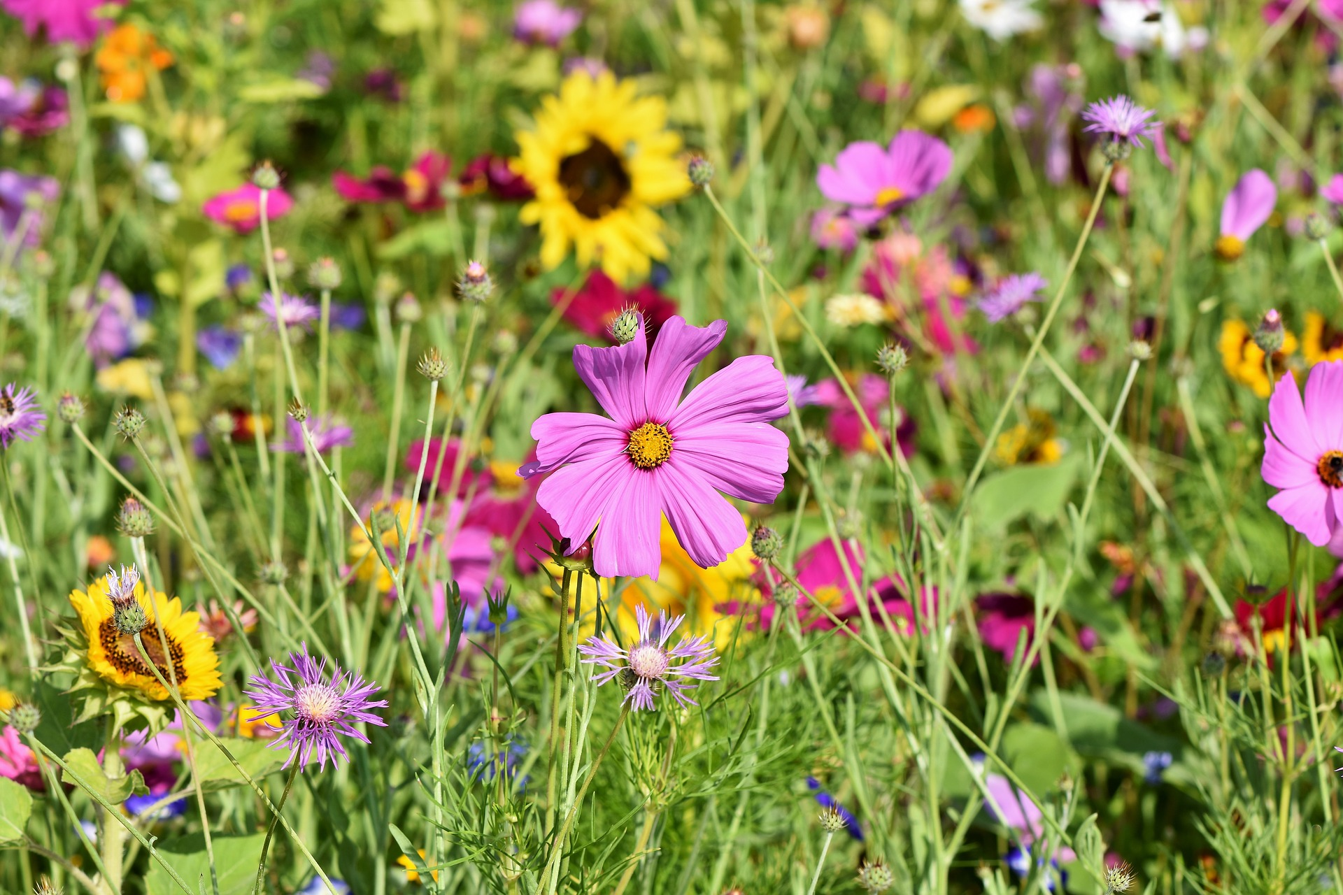 Flowers of many colors in a green field