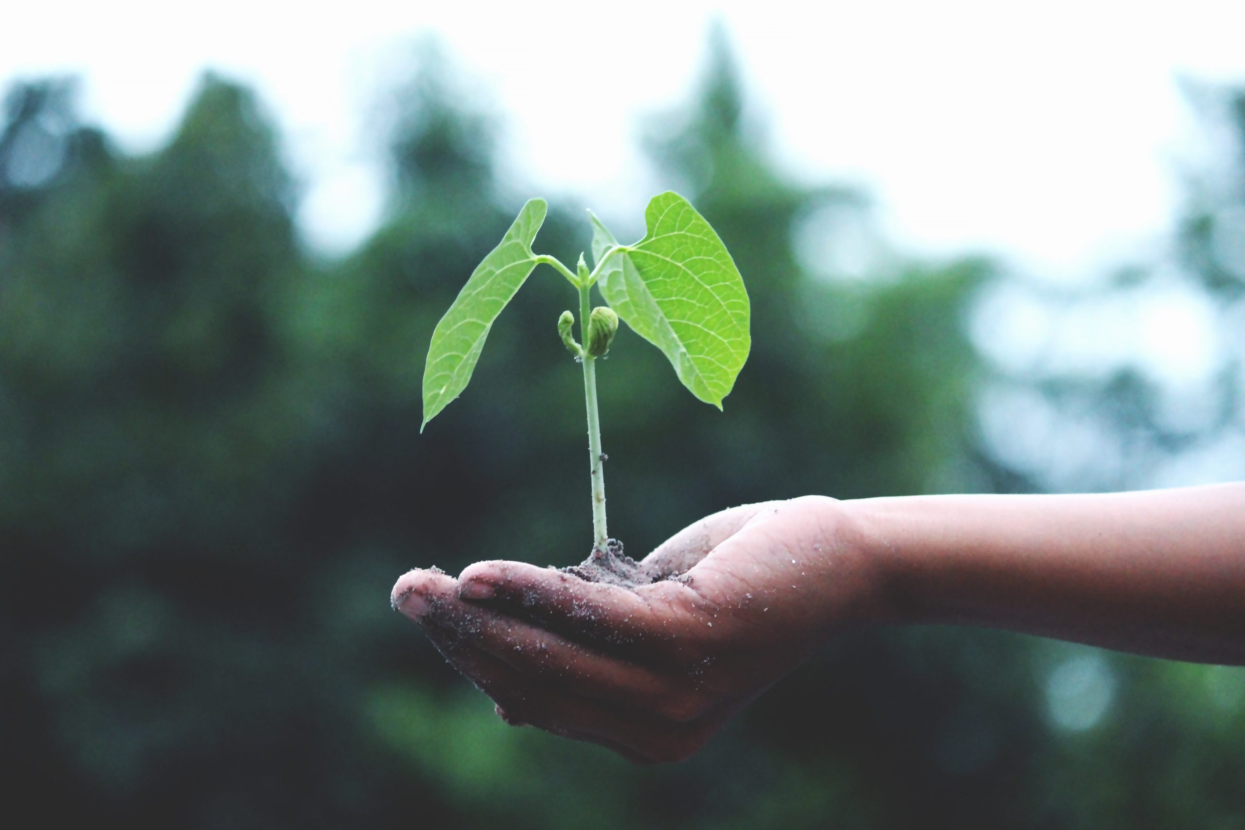 A hand holding a small, growing green plant